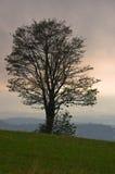 在小山的树在Rajac的一场快的夏天风暴之前 库存照片