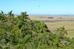 在小山的棕榈 免版税图库摄影