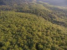 在小山的森林盖子 在视图之上 免版税库存照片