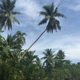 在小山的椰子树有蓝天背景 库存图片