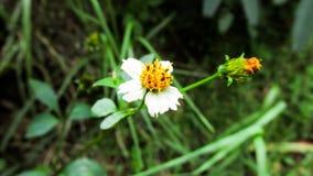 在小山的白花 图库摄影