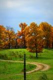 在小山的秋天树 免版税库存照片
