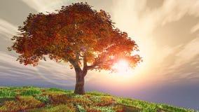 在小山的秋天樱桃树反对太阳 免版税库存照片