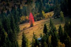 在小山的秋天 免版税库存照片