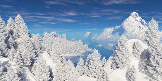 在小山的积雪的树 库存照片