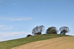在小山的结构树 库存照片