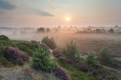 在小山的美好的有雾的日出与石南花和杉木 库存照片
