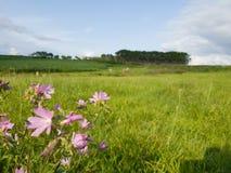 在小山的花在一个晴天 免版税图库摄影