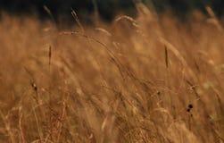 在小山的草 免版税图库摄影