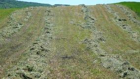 在小山的被割的草 免版税库存图片