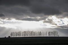 在小山的被排行的树 免版税库存照片