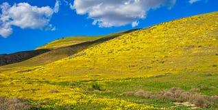 在小山的野花 库存图片