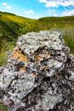 在小山的领域的一块石头 免版税库存照片