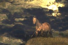 在小山的马在晚上 免版税库存图片
