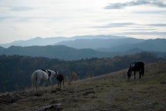 在小山的马 免版税库存照片