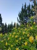 在小山的黄斑 免版税库存图片