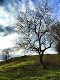 在小山的结构树 免版税库存图片