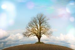 在小山的结构树 图库摄影