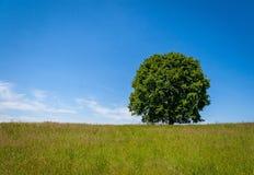 在小山的结构树 库存图片