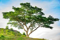 在小山的结构树 免版税库存照片