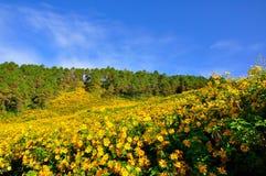 在小山的黄色向日葵 免版税图库摄影