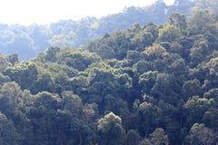 在小山的绿色树 免版税库存照片