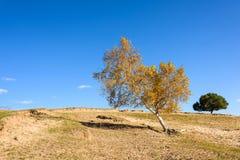 在小山的黄色树 免版税库存图片