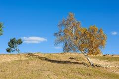 在小山的黄色树 图库摄影