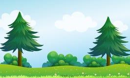 在小山顶的杉树 免版税库存图片