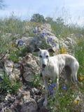 在小山顶的美丽的Whippet狗 免版税图库摄影
