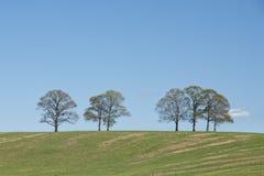 在小山顶的结构树 免版税图库摄影