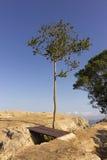 在小山顶部的一棵树 库存图片