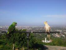 在小山顶部的鸟在Hadyai,宋卡,泰国 免版税库存照片