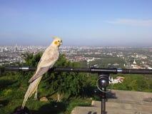 在小山顶部的鸟在Hadyai,宋卡,泰国 免版税库存图片