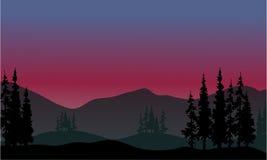 在小山风景的云杉 图库摄影