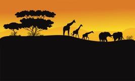 在小山风景的动物 免版税图库摄影