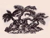 在小山,三棵树的构成的棕榈树 免版税库存图片