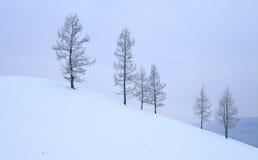 在小山,冬天的树 库存图片
