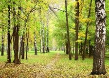 在小径的早晨薄雾在10月混合了森林 免版税库存照片