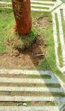 在小径的树 免版税库存图片