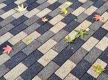 在小径背景的下落的叶子 免版税图库摄影