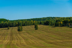 在小条的被割的草在一个狂放的领域 免版税库存图片