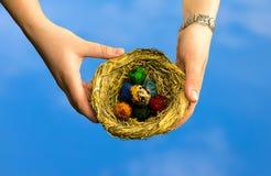 在小柳条巢的鸡蛋在蓝色背景的手上 库存图片