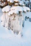 在小树的美好的冰柱冰层 免版税库存照片