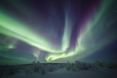 在小桦树森林上的北极光 免版税库存图片