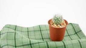 在小棕色植物罐的小的绿色仙人掌 库存图片