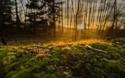 在小森林后的日落 免版税库存图片