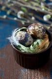 新鲜的鹌鹑蛋 免版税库存照片