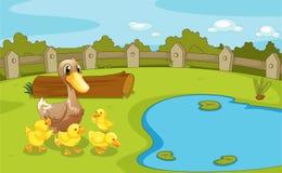 在小池塘附近的鸭子 库存图片
