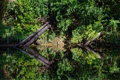 在小河反映的当地灌木 免版税库存图片